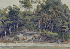 St Catherines Island